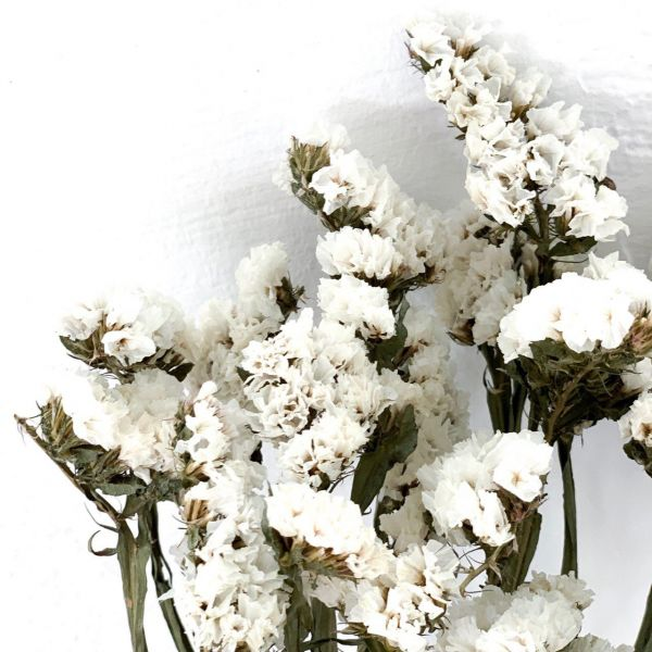 Statice Blanche - Bouquet